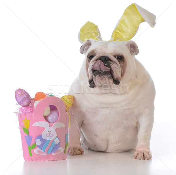 dog dressed up for easter Stock photo © willeecole