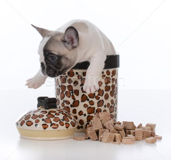 Stock fotó: Kutyakölyök · bent · süti · bögre · francia · bulldog