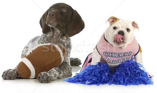 Deportes Inglés bulldog fútbol aficionados Foto stock © willeecole