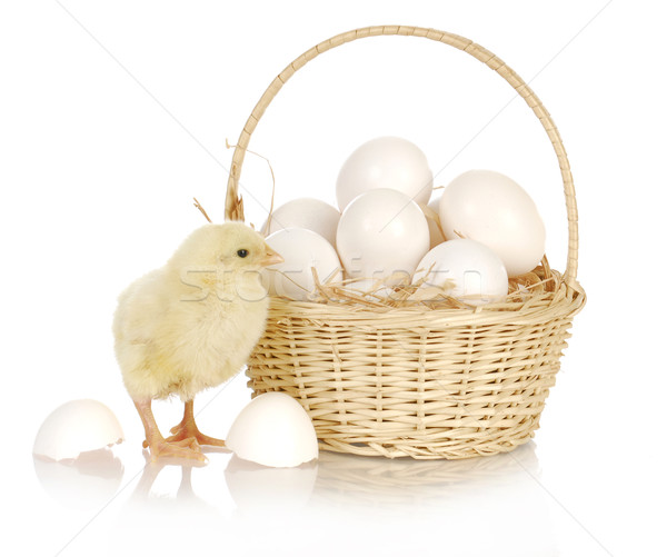 basket of eggs with baby chich Stock photo © willeecole
