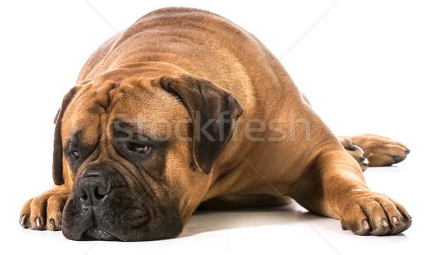 Hoofd beneden witte gezicht mond Stockfoto © willeecole