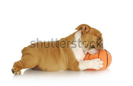 playful puppy Stock photo © willeecole