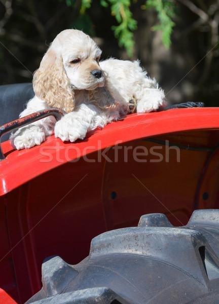 ファーム 犬 子犬 フェンダー トラクター ストックフォト © willeecole
