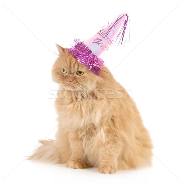 ストックフォト: 歳の誕生日 · 猫 · 着用 · パーティ · 帽子 · 孤立した