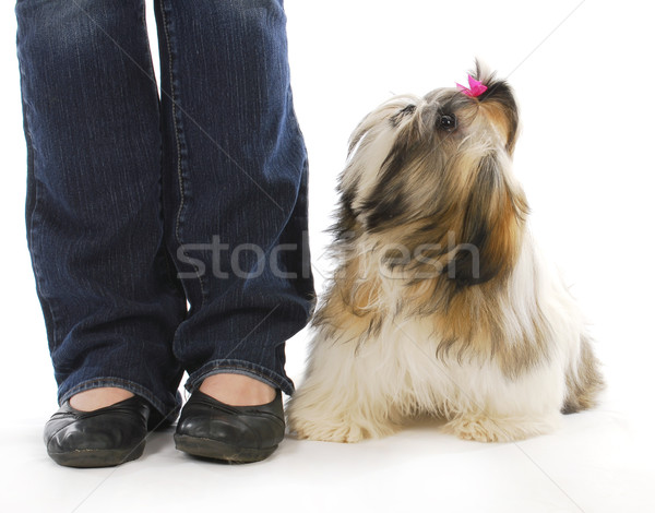 dog and owner Stock photo © willeecole
