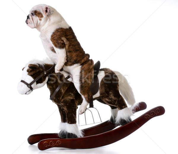 Pays chien anglais bulldog équitation cheval à bascule Photo stock © willeecole
