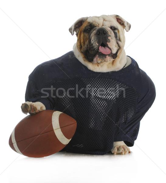 sports hound Stock photo © willeecole