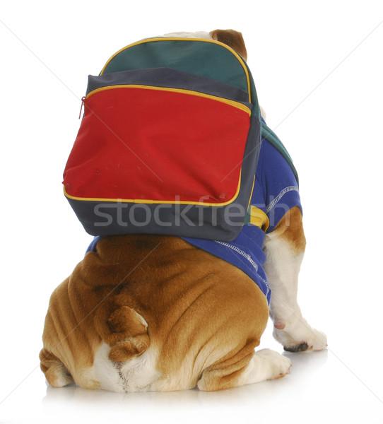 Köpek itaat okul İngilizce buldok geri Stok fotoğraf © willeecole