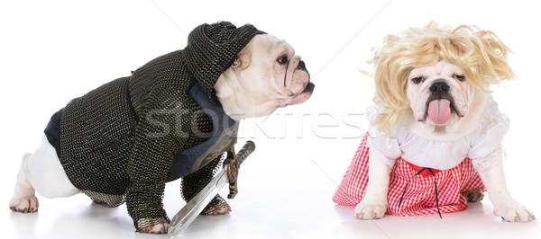 Chevalier up comme détresse blanche chien Photo stock © willeecole