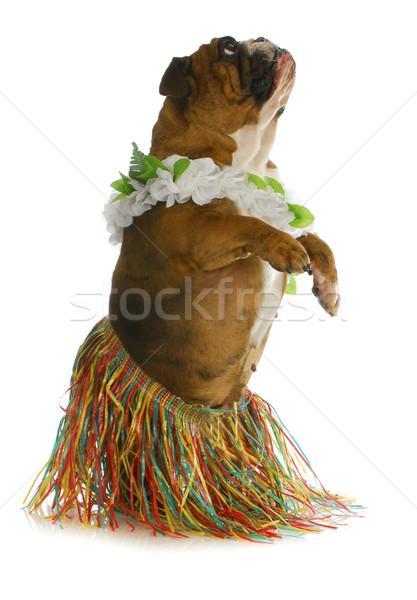 dog dancer Stock photo © willeecole