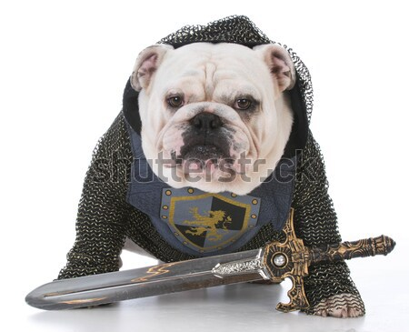 dog dressed as knight Stock photo © willeecole