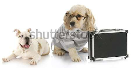 dog breeding Stock photo © willeecole