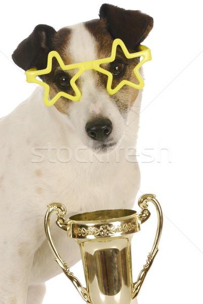 Foto stock: Campeón · perro · terrier · estrellas · gafas