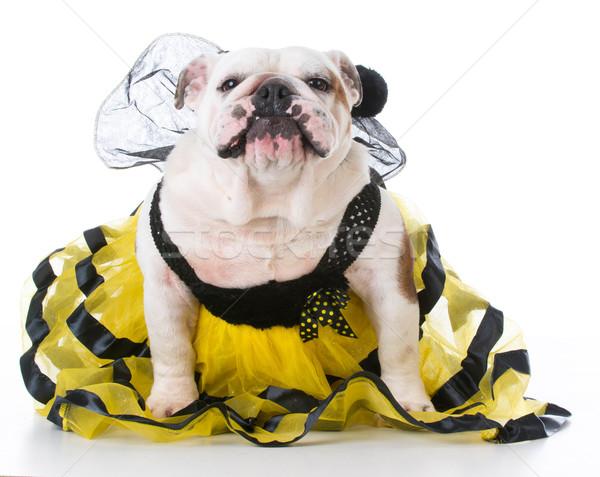 dog dressed like a bee Stock photo © willeecole