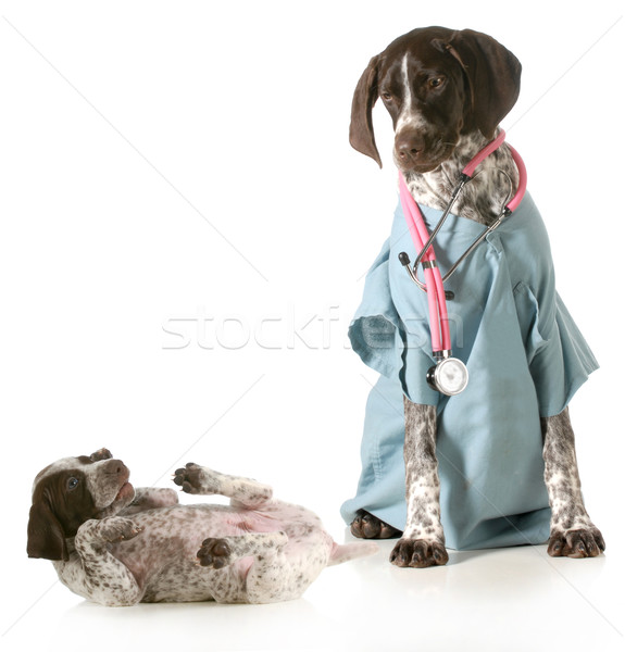veterinary care Stock photo © willeecole