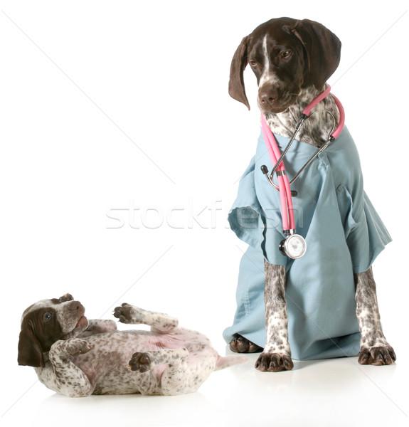 állatorvosi törődés állatorvos néz beteg kutyakölyök Stock fotó © willeecole