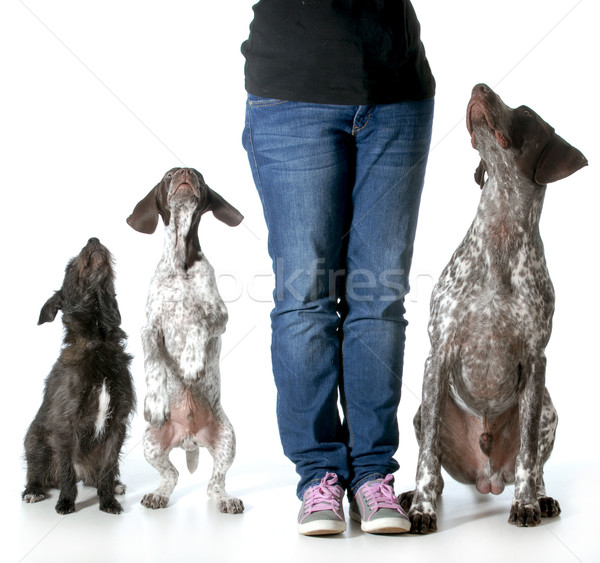 woman and her dogs Stock photo © willeecole