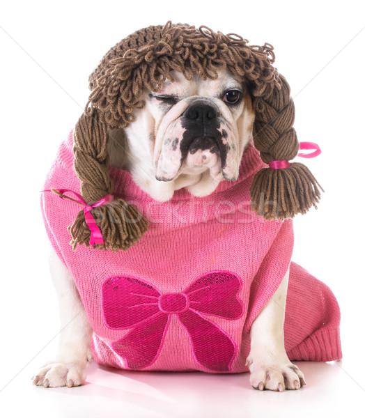 Női kutya kacsintás bulldog visel paróka Stock fotó © willeecole