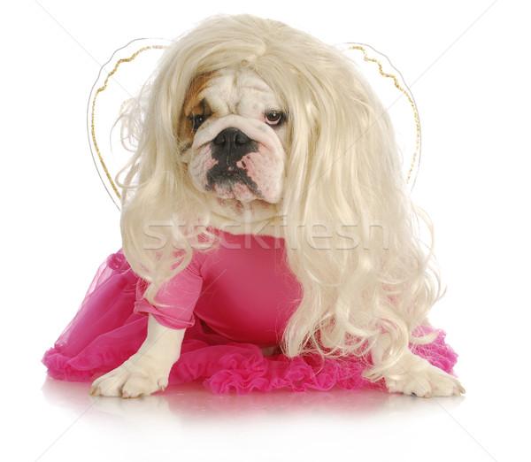 Сток-фото: собака · английский · бульдог · подобно · Принцесса · белый