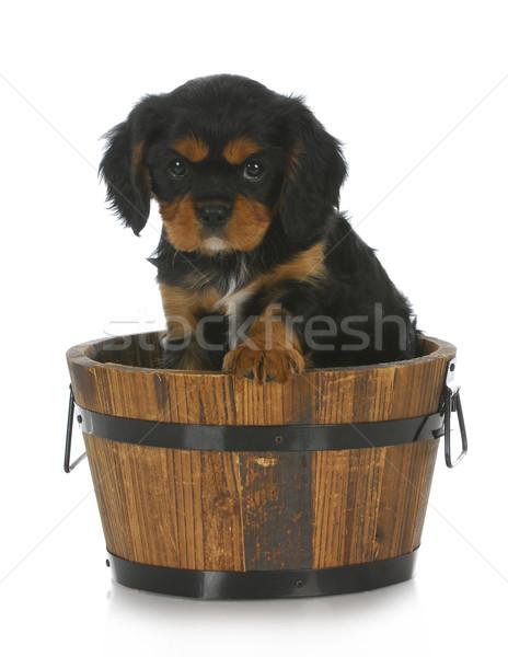Stock photo: cute puppy