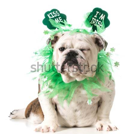 Stock photo: St Patricks day dog