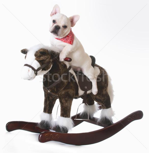 Chien équitation cheval cheval à bascule français bulldog Photo stock © willeecole