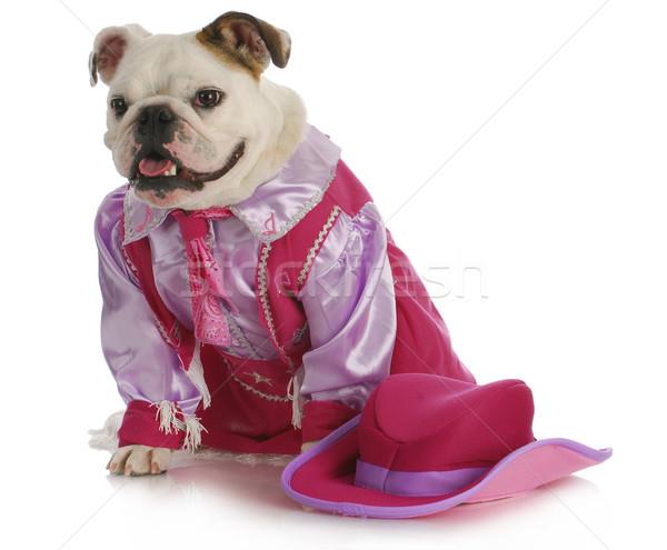 bulldog cowgirl Stock photo © willeecole