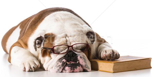 Okos kutya visel olvasószemüveg könyv fehér Stock fotó © willeecole