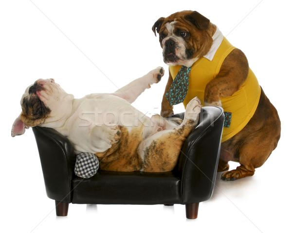 Faul Hund Englisch Bulldogge stehen Stock foto © willeecole