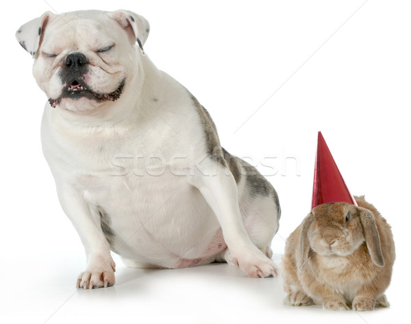 birthday pets Stock photo © willeecole