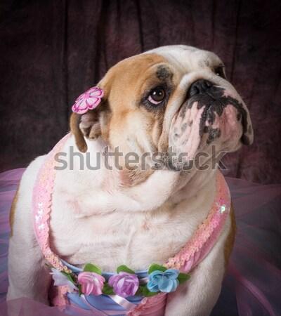 female dog Stock photo © willeecole