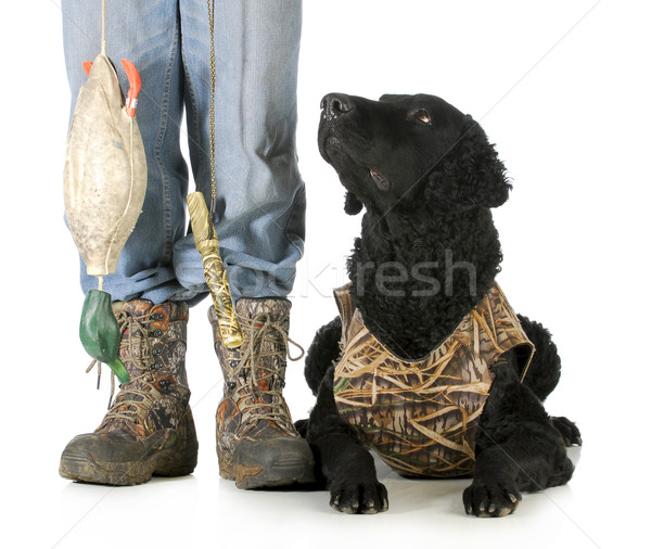 Jachthond gekruld retriever naast jager man Stockfoto © willeecole