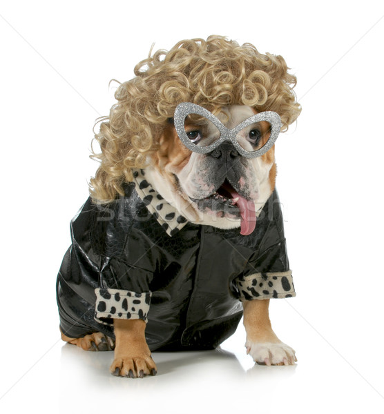 female dog Stock photo © willeecole