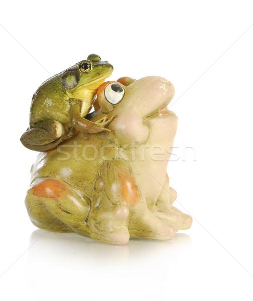 座って 戻る セラミック カエル 孤立した 白 ストックフォト © willeecole