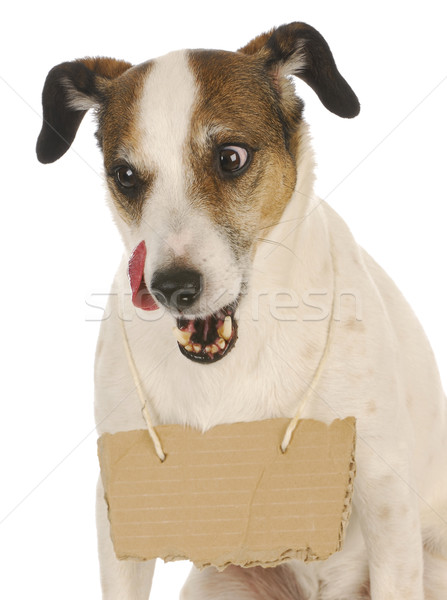 犬 メッセージ ジャックラッセルテリア 周りに 首 ストックフォト © willeecole