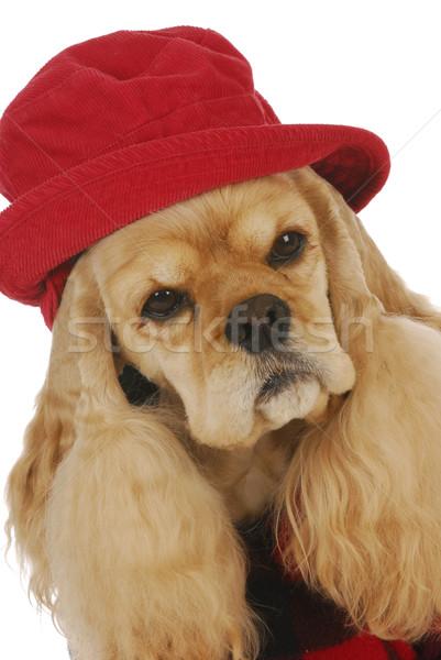 Foto stock: Bonitinho · cão · adorável · vermelho · seis