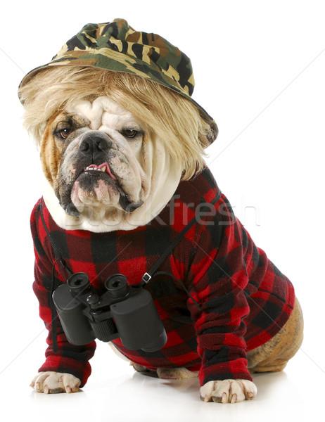 Vadászkutya angol bulldog felfelé ahogy redneck Stock fotó © willeecole