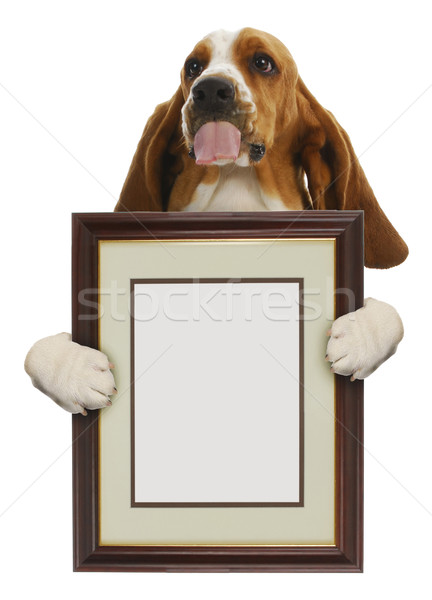 dog holding picture frame Stock photo © willeecole