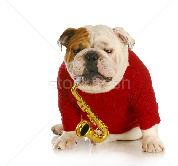 dog playing musical instrument Stock photo © willeecole