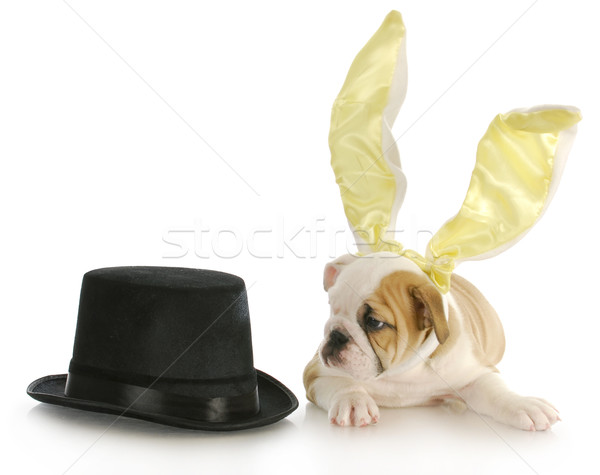 easter puppy Stock photo © willeecole