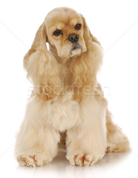 Foto stock: Bonitinho · cão · adorável · sessão · reflexão · branco