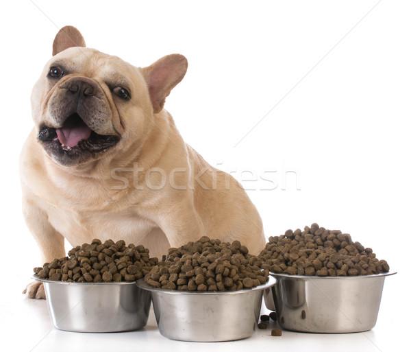 Сток-фото: собака · французский · бульдог · сидят
