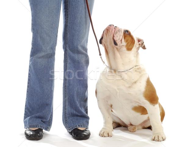犬 服従 訓練 英語 ブルドッグ 座って ストックフォト © willeecole