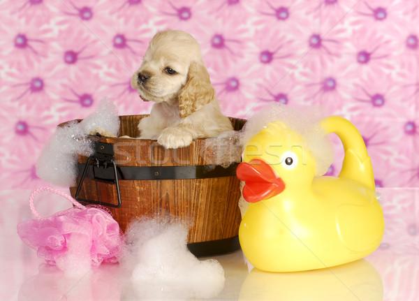Foto stock: Perro · bano · americano · lavado · bañera · completo