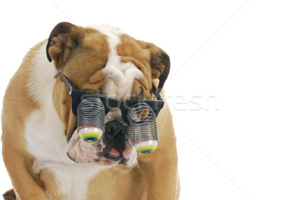Grappig hond bril Engels bulldog Stockfoto © willeecole