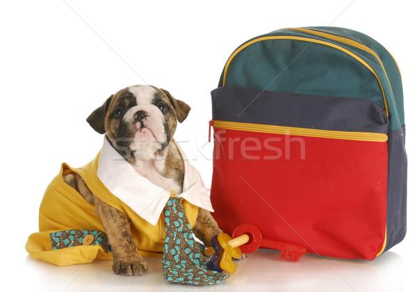 Köpek yavrusu itaat eğitim okul İngilizce buldok Stok fotoğraf © willeecole