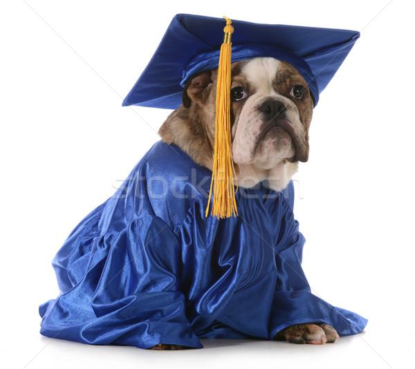 puppy school Stock photo © willeecole