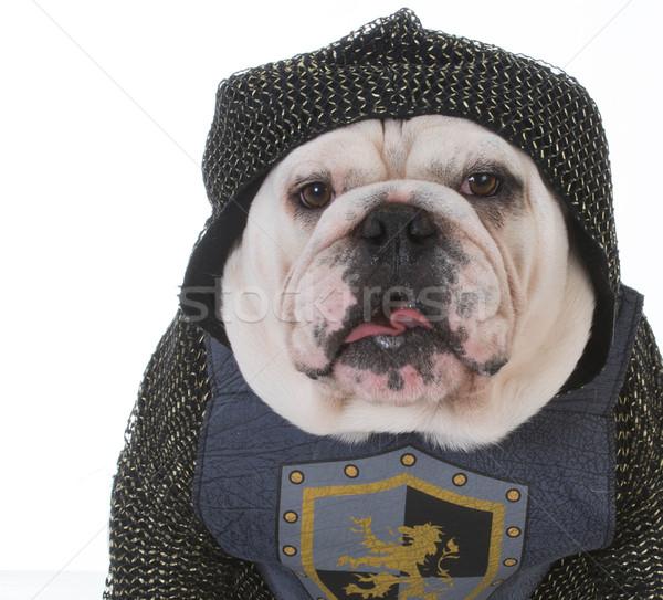 knight Stock photo © willeecole
