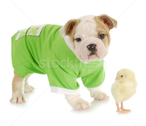 Stock fotó: Kutyakölyök · baba · csirke · zöld · tyúk · vicces