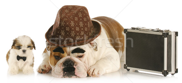 Stock photo: working dogs